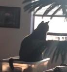 Max&Window2 (2)